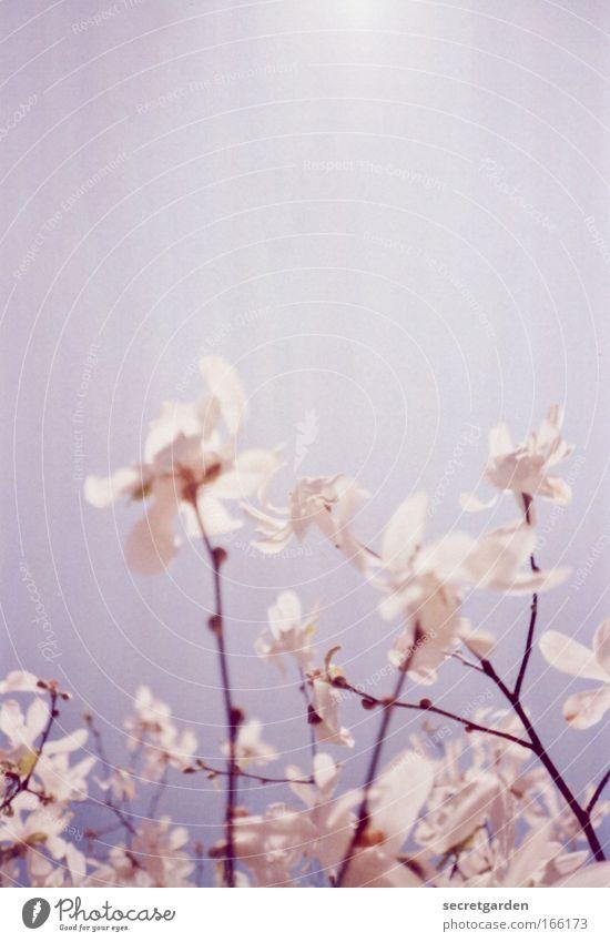 marilyn manson Natur blau schön Sommer Wärme Frühling Glück träumen hell Park rosa Wachstum ästhetisch leuchten Morgen Romantik
