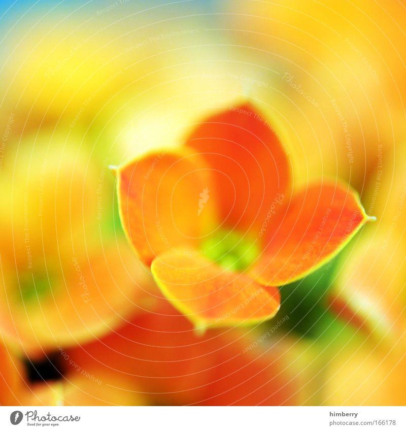 antonia presents Natur schön Blume Pflanze Sommer gelb Gefühle Blüte Frühling Glück Park Zufriedenheit Stimmung Design gold frisch