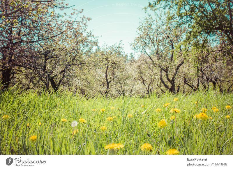 Streuobstwiese (Sonne) Natur Landschaft Pflanze Himmel Frühling Sommer Baum Blume Gras Blüte Grünpflanze Nutzpflanze Wildpflanze Garten Wiese natürlich blau