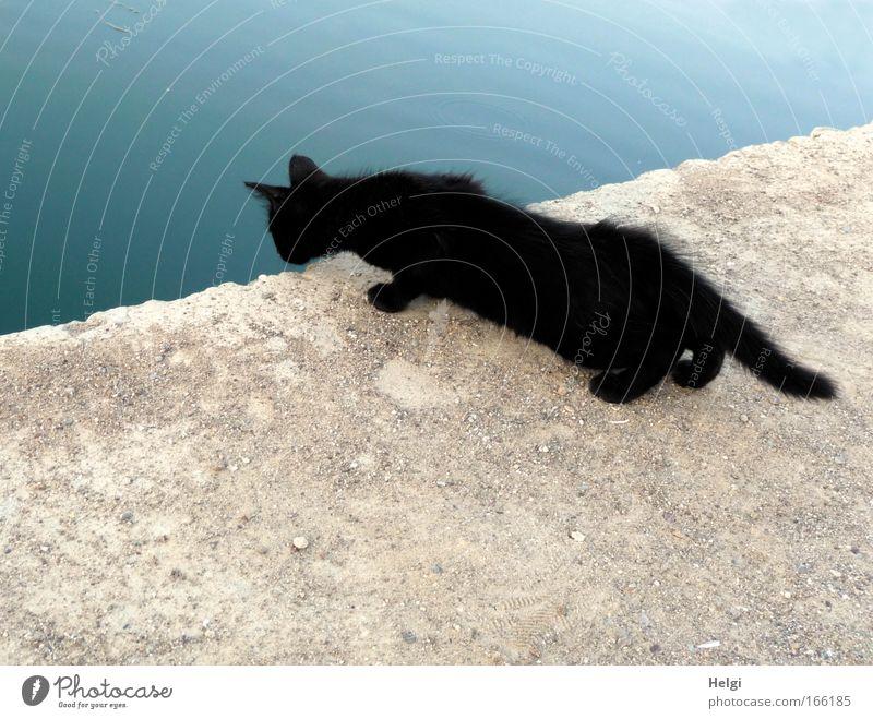 neugierig.... Katze blau Wasser Tier schwarz Umwelt Wand grau Mauer See Tierjunges Zufriedenheit Angst ästhetisch niedlich beobachten