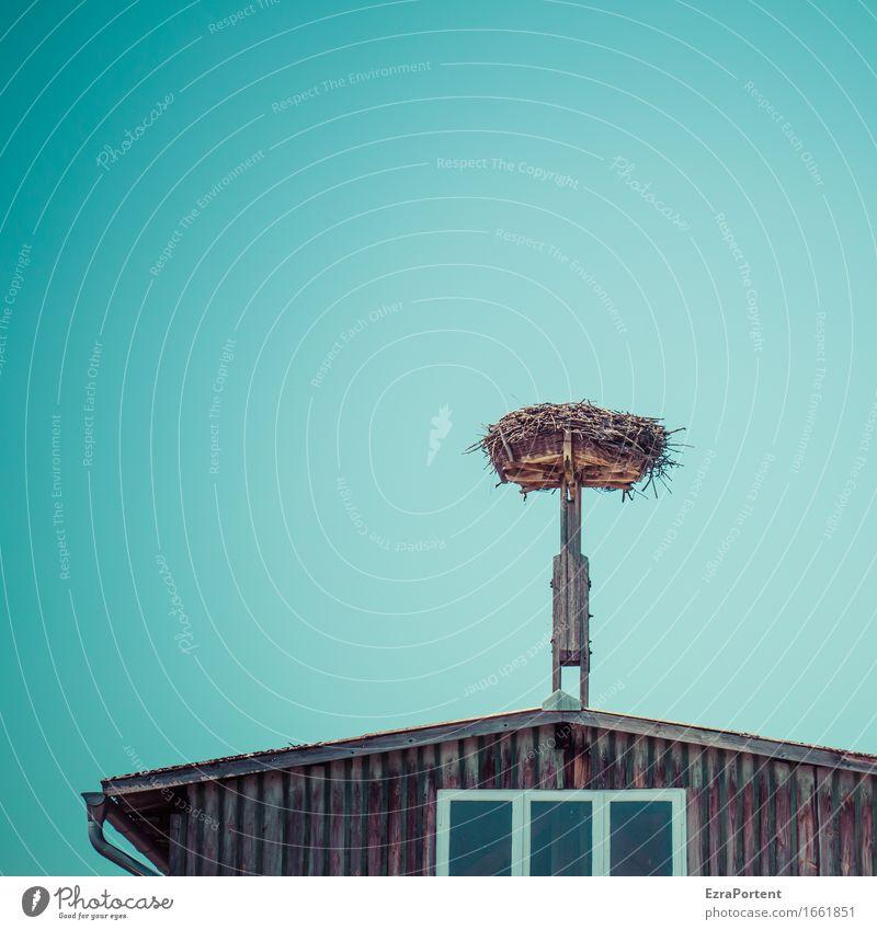 ausgeflogen Umwelt Natur Himmel Wolkenloser Himmel Frühling Haus Bauwerk Gebäude Mauer Wand Fassade Fenster Dach Dachrinne blau braun grau Nest Baustelle leer