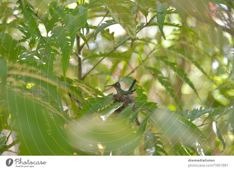 Nesthocker grün Tier Umwelt klein Vogel sitzen ästhetisch warten Neugier entdecken exotisch Schüchternheit Brutpflege