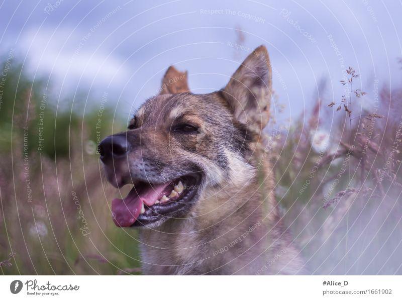 ein Hundehimmel Natur Landschaft Pflanze Tier Himmel Frühling Sommer Gras Wildpflanze Wiese Feld Haustier 1 Duft genießen schlafen träumen Treue ruhig Erholung