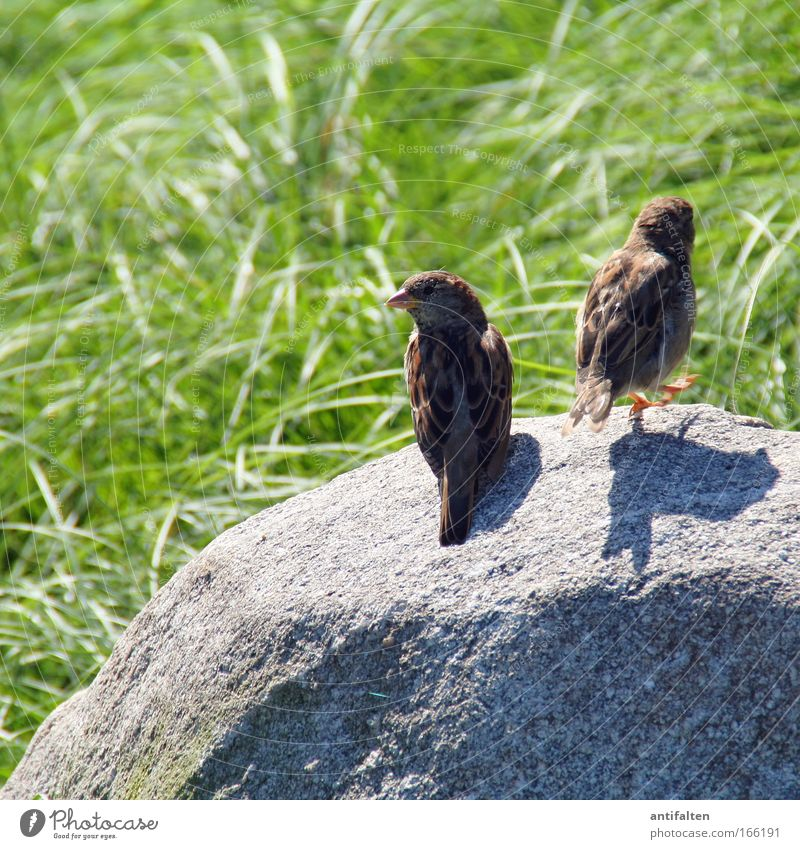 ...und tschüß! Natur Sommer Tier Wiese Gras Bewegung Stein braun Vogel Tierpaar gehen sitzen paarweise Flügel beobachten Idylle