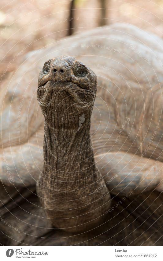 Uralt Sommer Tier Bewegung natürlich Holz außergewöhnlich Stein braun Sand elegant Wildtier ästhetisch Neugier Schutz Sicherheit