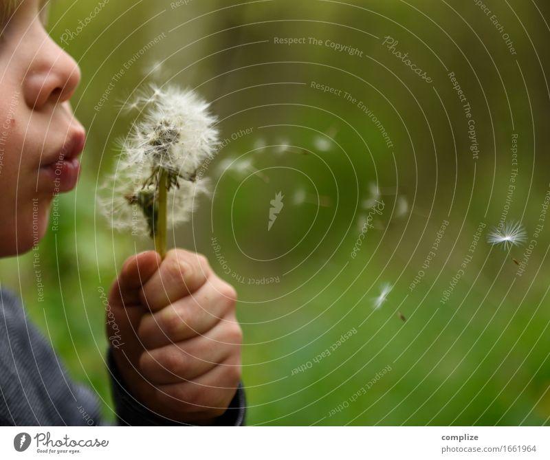 Puste Fix Natur Pflanze Sommer Blume Erholung Freude Umwelt Blüte Frühling Wiese Gesundheit Garten Gesundheitswesen Park Wetter Zufriedenheit