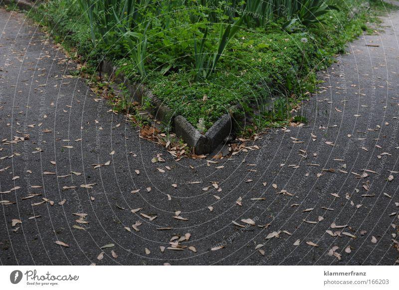 Entscheidung Natur Straße Wiese Gras Garten Bewegung Stein Wege & Pfade Park Beton wandern Kommunizieren Güterverkehr & Logistik Verkehrswege Stress Karriere
