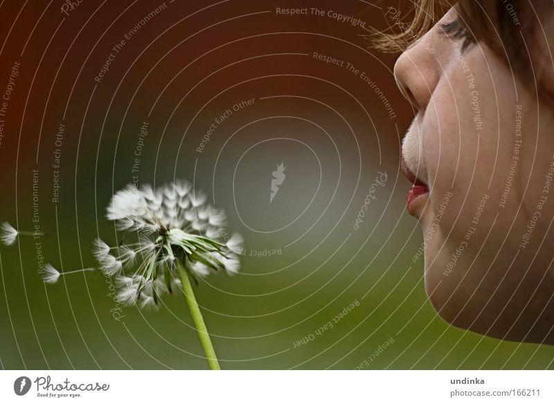 Blow it Kind Mädchen Kindheit Gesicht Nase Mund Lippen 1 Mensch 3-8 Jahre Natur Pflanze Luft Frühling Wetter Blume Wildpflanze Park rothaarig Pony atmen