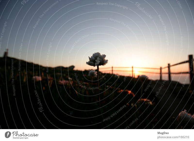 sunleave Farbfoto Außenaufnahme Menschenleer Textfreiraum oben Textfreiraum unten Abend Dämmerung Sonnenlicht Sonnenaufgang Sonnenuntergang
