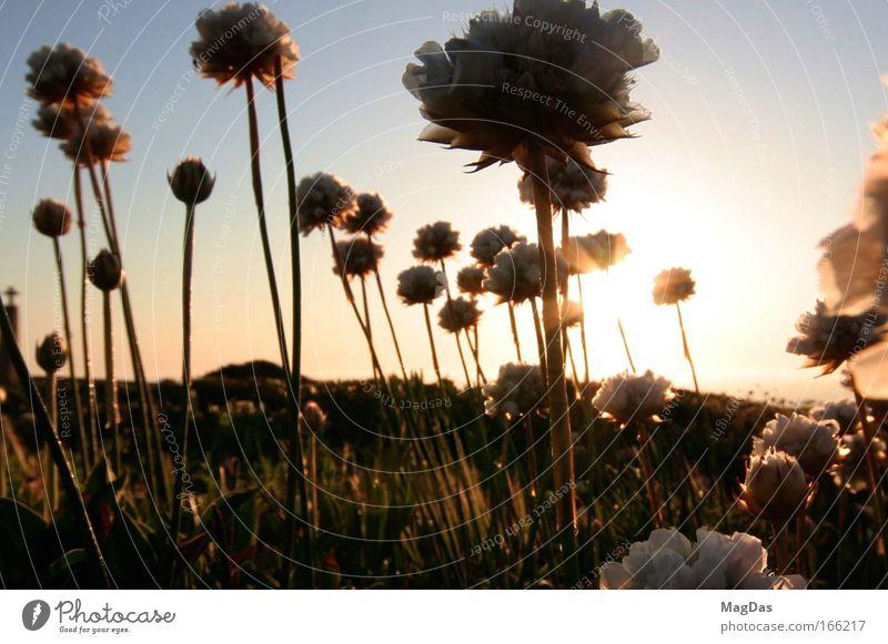 sunleave2 Farbfoto Außenaufnahme Abend Dämmerung Sonnenstrahlen Sonnenaufgang Sonnenuntergang Schwache Tiefenschärfe Weitwinkel Natur Landschaft Himmel