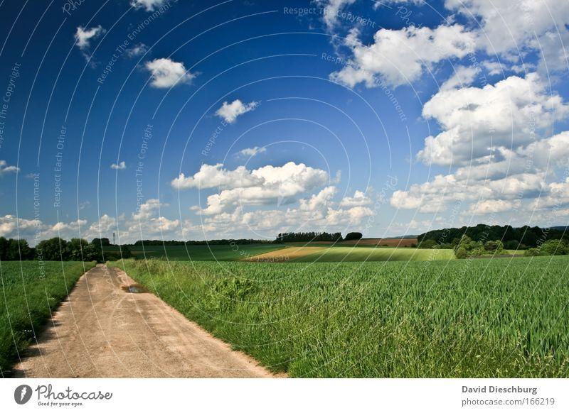 Long walk home Himmel Natur blau grün weiß Sommer Pflanze Wolken Landschaft Umwelt Frühling Wege & Pfade Horizont Feld Erde Schönes Wetter