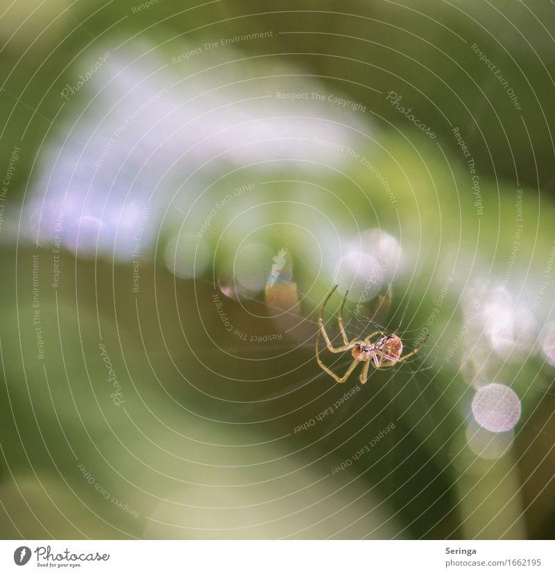 Seilacrobatic Natur Pflanze Tier Frühling Sommer Farn Blatt Blüte Wildpflanze Garten Park Wiese Wald Wildtier Spinne Tiergesicht 1 hängen Spinnennetz