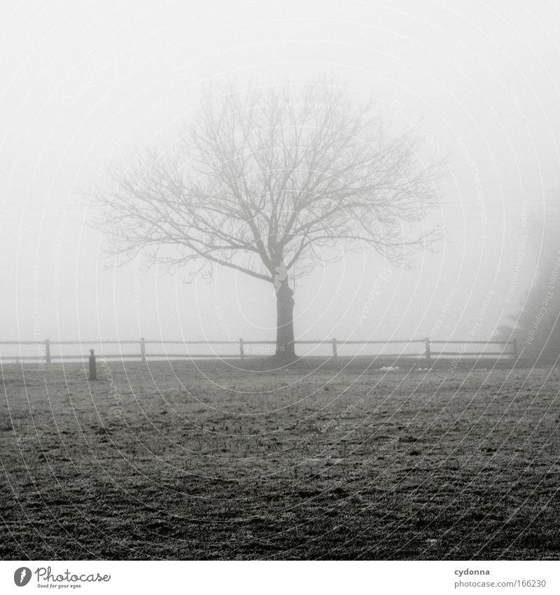 Sichtbar Natur Baum Winter ruhig Leben Wiese Gefühle Gras Freiheit träumen Traurigkeit Landschaft Eis Stimmung Feld Nebel
