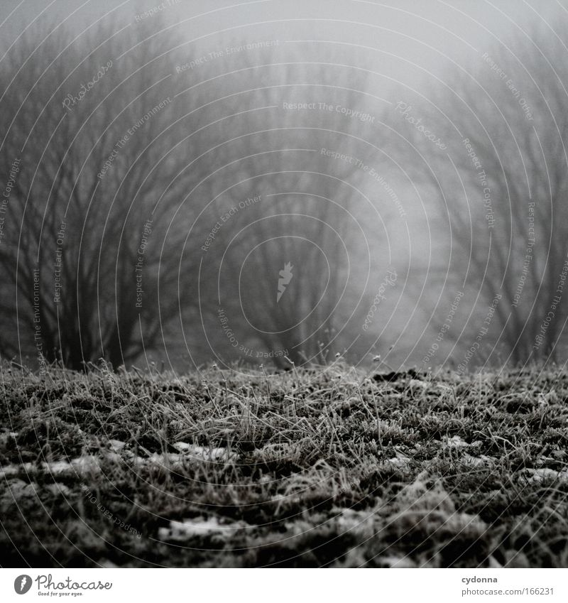 Stille Natur Baum Winter ruhig Einsamkeit Wald Leben kalt Wiese Gefühle Tod Gras träumen Traurigkeit Landschaft Eis