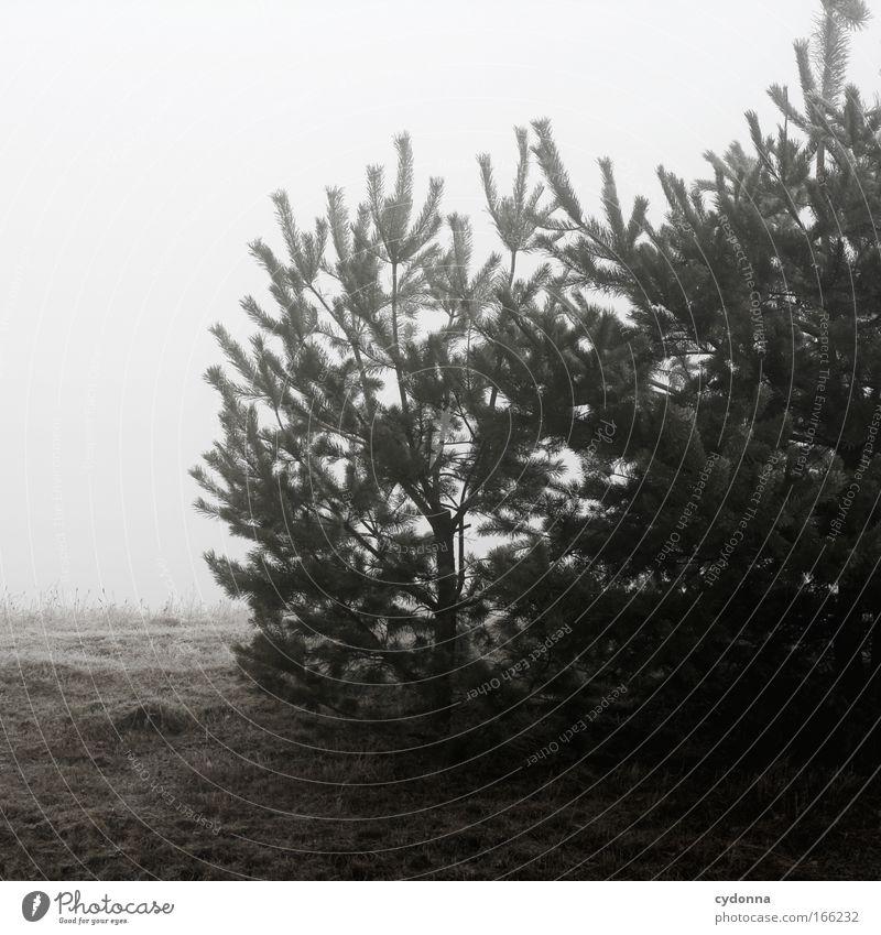Trostlos Natur Himmel Baum Winter ruhig Tier Leben Wiese Gefühle Tod Traurigkeit Eis Stimmung Nebel Umwelt Zeit