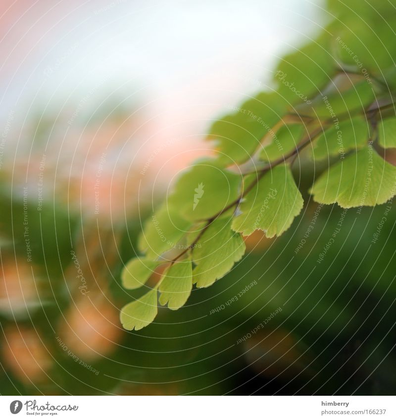 wild life green Natur grün Baum Pflanze Sommer ruhig Erholung Umwelt Leben Frühling träumen Park Design Wachstum ästhetisch Sträucher