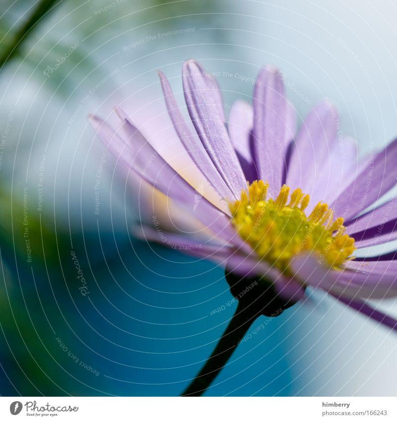 momentariness Natur schön Blume blau Pflanze Sommer ruhig gelb Leben Erholung Blüte Frühling Zufriedenheit rosa Design Umwelt