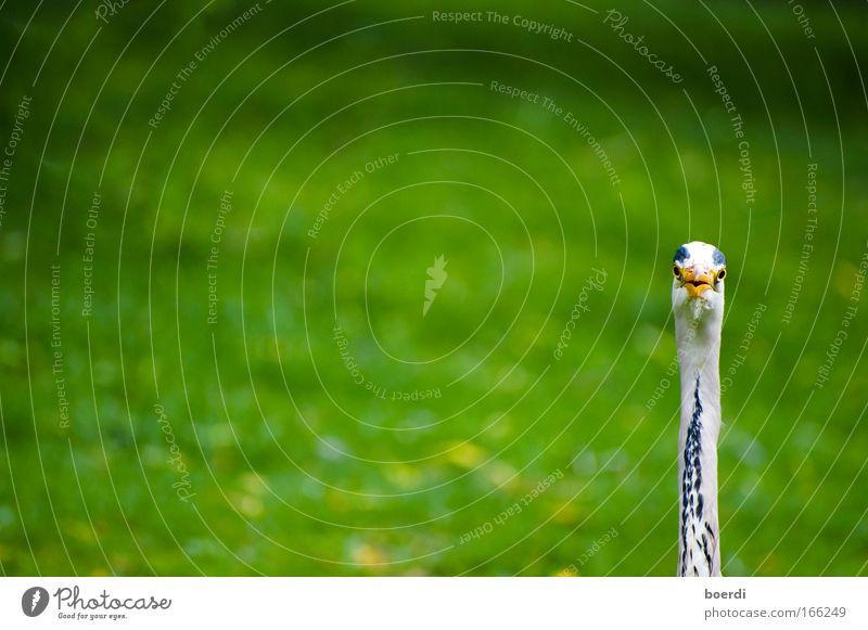 eIns Natur grün Tier ruhig Leben lustig Vogel Linie außergewöhnlich natürlich Wildtier frei Kommunizieren Neugier nah lang