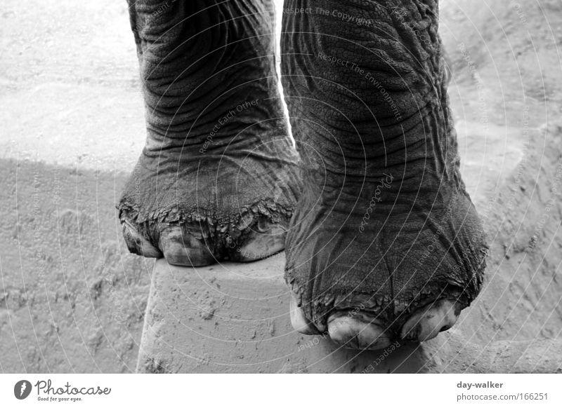 Einmal Pediküre bitte ... Schwarzweißfoto Außenaufnahme Detailaufnahme Menschenleer Tag Schatten Kontrast Schwache Tiefenschärfe Zentralperspektive Tier