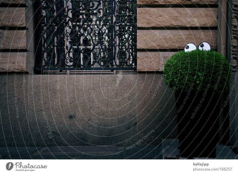 türsteher Sträucher Buchsbaum Comic Grünpflanze Fenster Reichtum Gitter Stein Mauer Haus Eingang Fuge Sandstein Architektur Garten Park Burg oder Schloss Topf