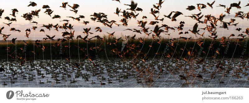 Alle meine Entchen Himmel Natur Wasser Sonne Sommer Ferien & Urlaub & Reisen Ferne Tier Leben Gefühle Landschaft Glück Stimmung Vogel Zufriedenheit nass
