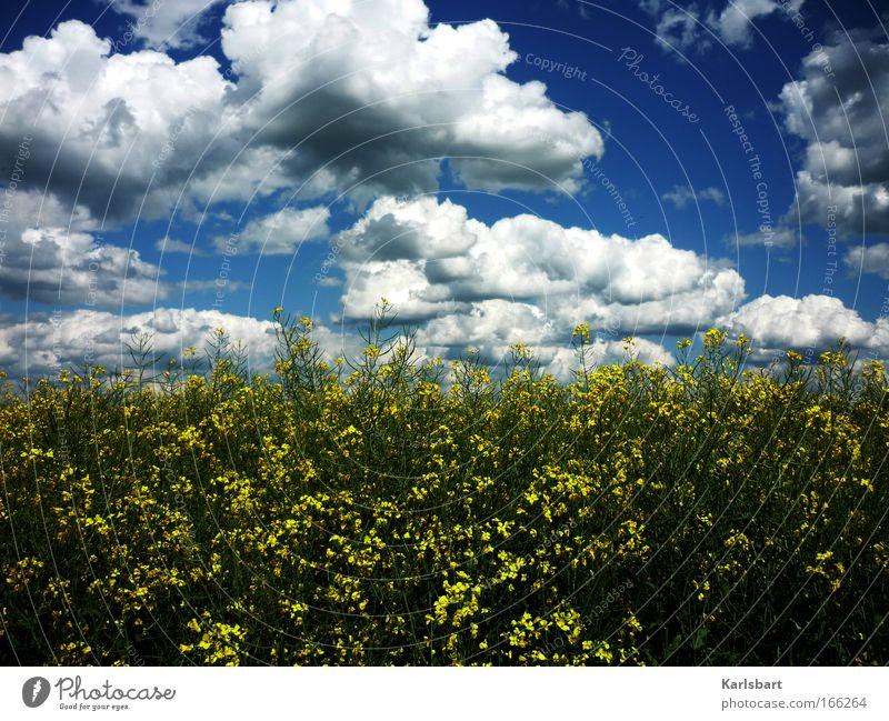 camenzind. peter. Natur Himmel Pflanze Sommer Wolken dunkel Gefühle Bewegung Frühling träumen Landschaft Feld wandern Wind Umwelt groß