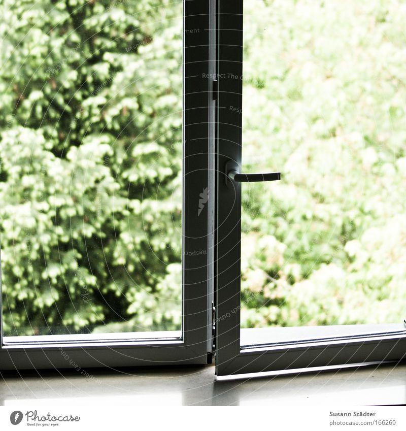 Spaltlüftung Pflanze ruhig Tier Ferne kalt Erholung Wiese Fenster Garten Freiheit Park Landschaft hell glänzend Tür Erfolg