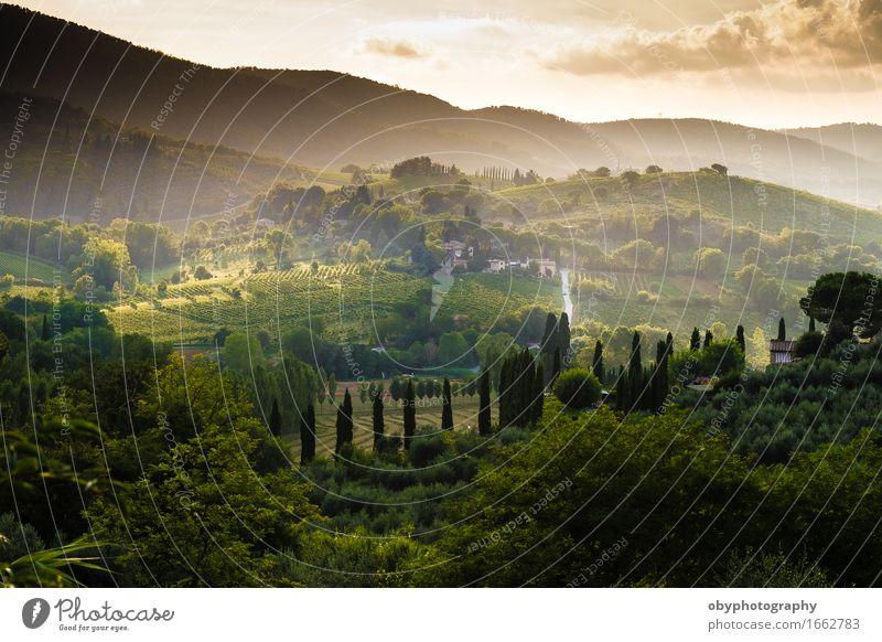 Toskana Licht ein Nebel Italienische Küche Erholung Meditation Ferien & Urlaub & Reisen Ausflug Sightseeing Städtereise Fahrradtour Sommerurlaub Landschaft