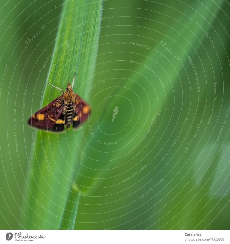 Kleines Päuschen Natur Gras Halm Garten Tier Schmetterling Insekt Motte 1 fliegen warten schön braun grün orange Zufriedenheit ruhend Erholung Umweltschutz