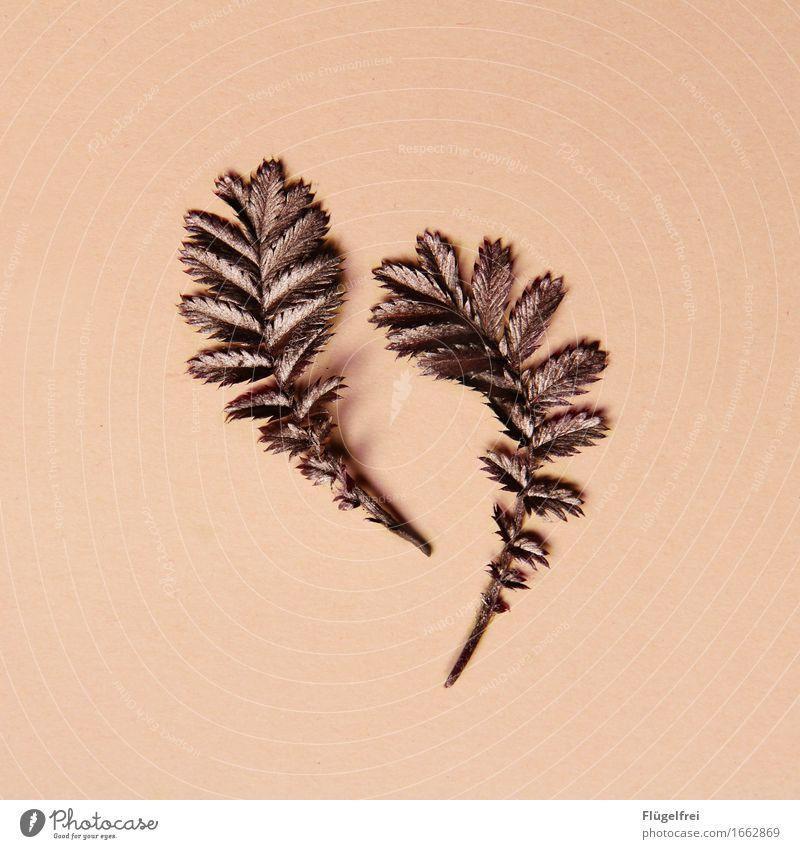 Growing Natur Pflanze Blatt rosa 2 Wachstum rund Kitsch edel Kupfer
