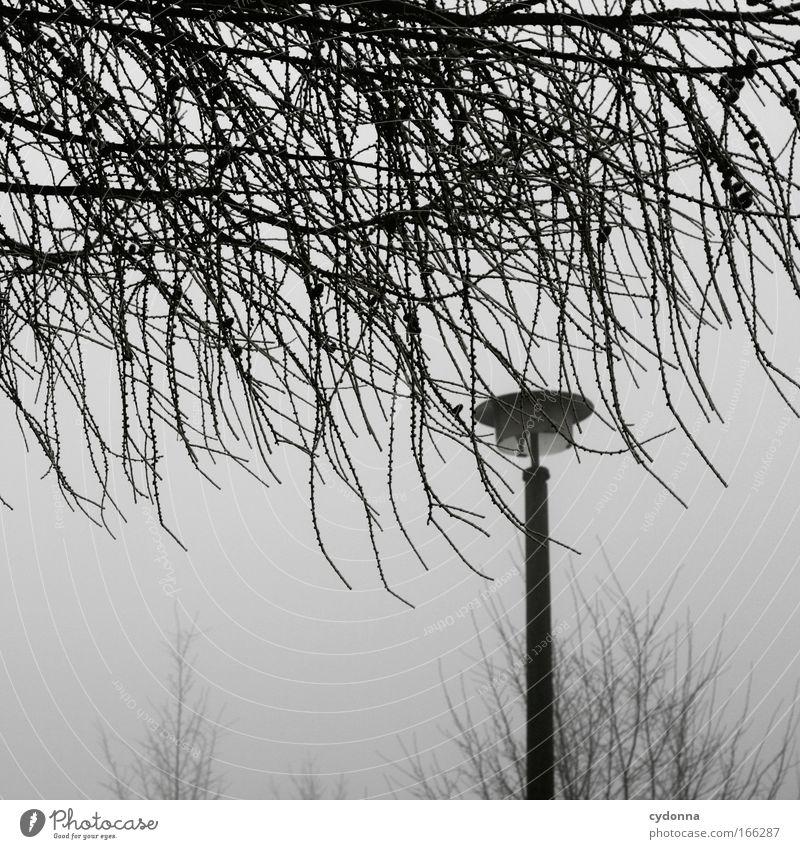 Licht aus Natur Himmel Baum Winter ruhig Einsamkeit Leben kalt Gefühle träumen Traurigkeit Stimmung Nebel Wetter Design Umwelt