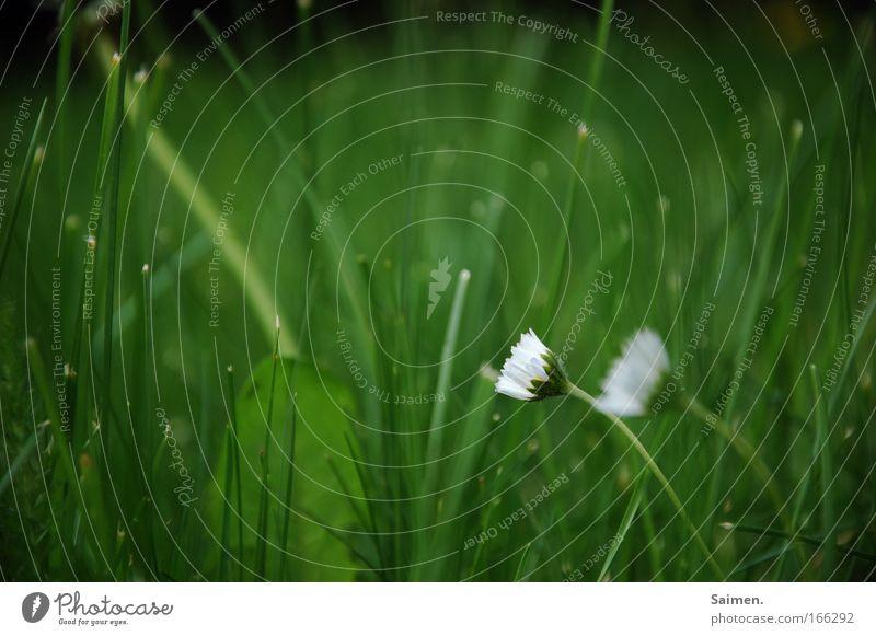 Blumen haben eine Seele Natur Pflanze Leben Wiese Blüte Gras Freiheit Zufriedenheit einfach geheimnisvoll Duft Partnerschaft Identität Frühlingsgefühle