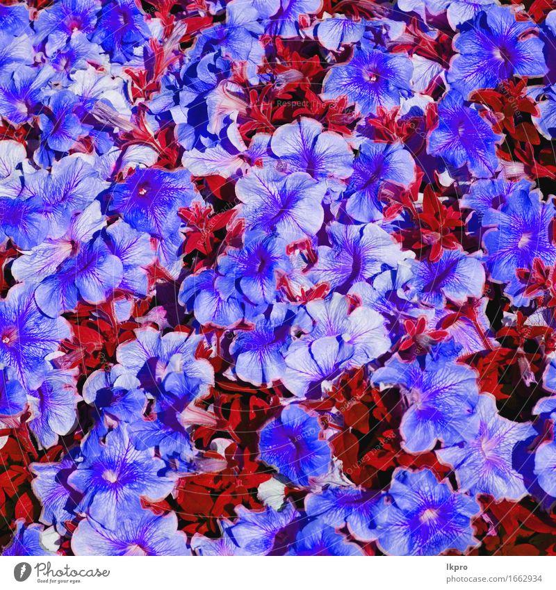 Blumen und Garten schön Sommer Natur Pflanze Gras Blatt Blüte Wiese Blühend Wachstum frisch hell wild blau gelb grün rosa rot weiß aromatisch Hintergrund