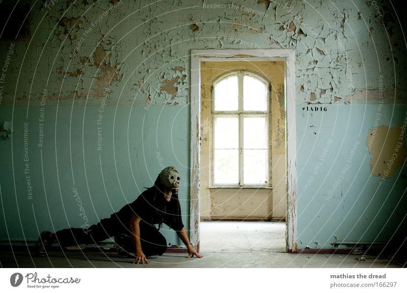WACHHUND Mensch alt Erwachsene Hund Fenster Wand Kopf Haare & Frisuren Raum Angst maskulin beobachten 18-30 Jahre verfallen Schutz Krieg