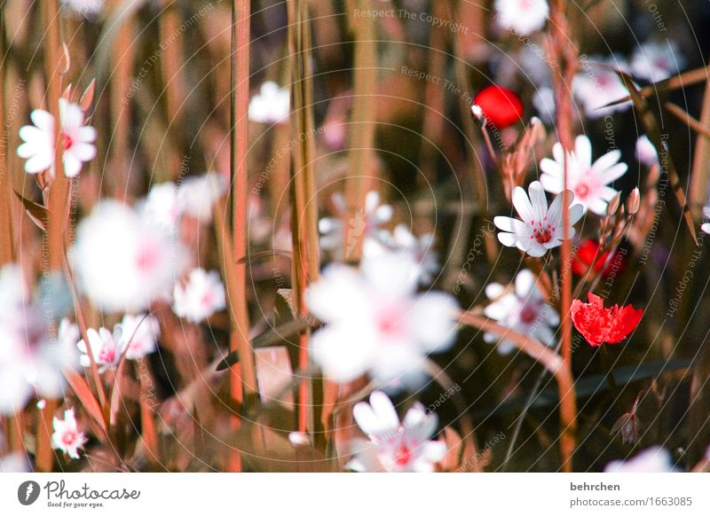 strohblümchen Natur Pflanze Sommer schön Blume Blatt Blüte Wiese Herbst klein Garten Park Feld Wachstum Blühend Schönes Wetter