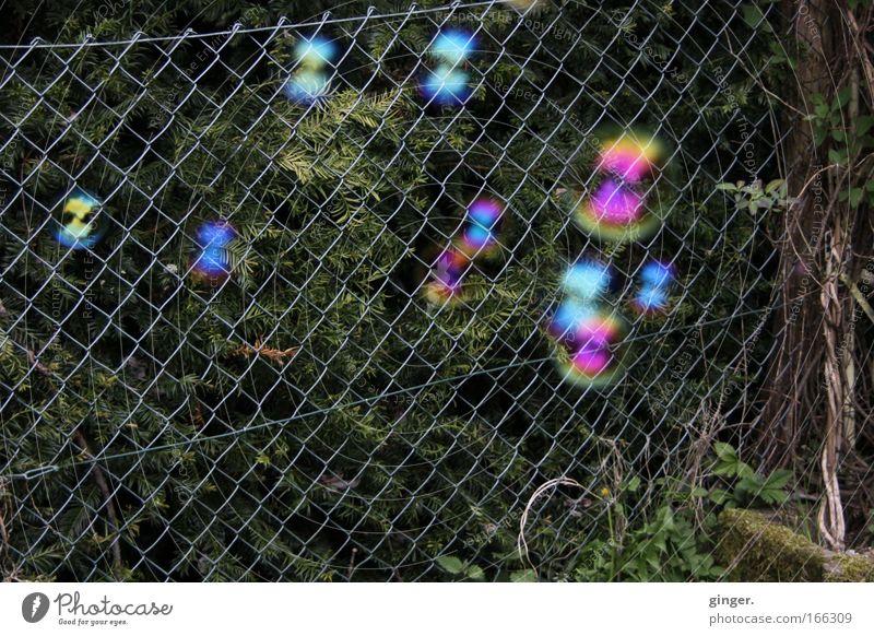 Seifenblasen vs Maschendrahtzaun Pflanze Spielen Traurigkeit Stein Stimmung Freizeit & Hobby rund Zaun durchsichtig Schweben Seifenblase Draht Leichtigkeit Schlaufe schillernd durchscheinend