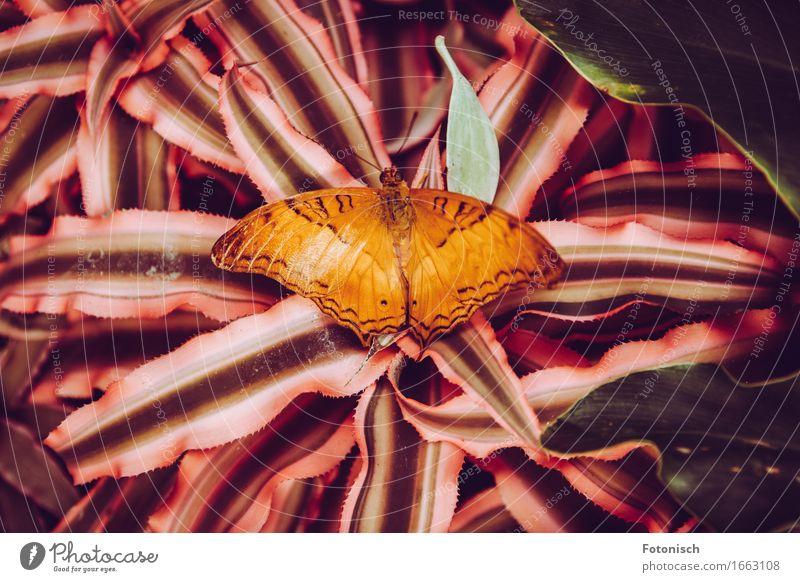 Schmetterling Natur Pflanze Farn Urwald 1 Tier Fühler orange einfarbig Flügel Farbfoto Außenaufnahme Nahaufnahme Vogelperspektive Ganzkörperaufnahme Rückansicht