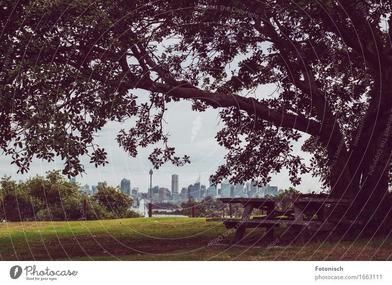 Picnic mit Blick auf Sydney Picknick Tourismus Ausflug Städtereise Camping Sommer Natur Landschaft Baum Park Australien Australien + Ozeanien Skyline