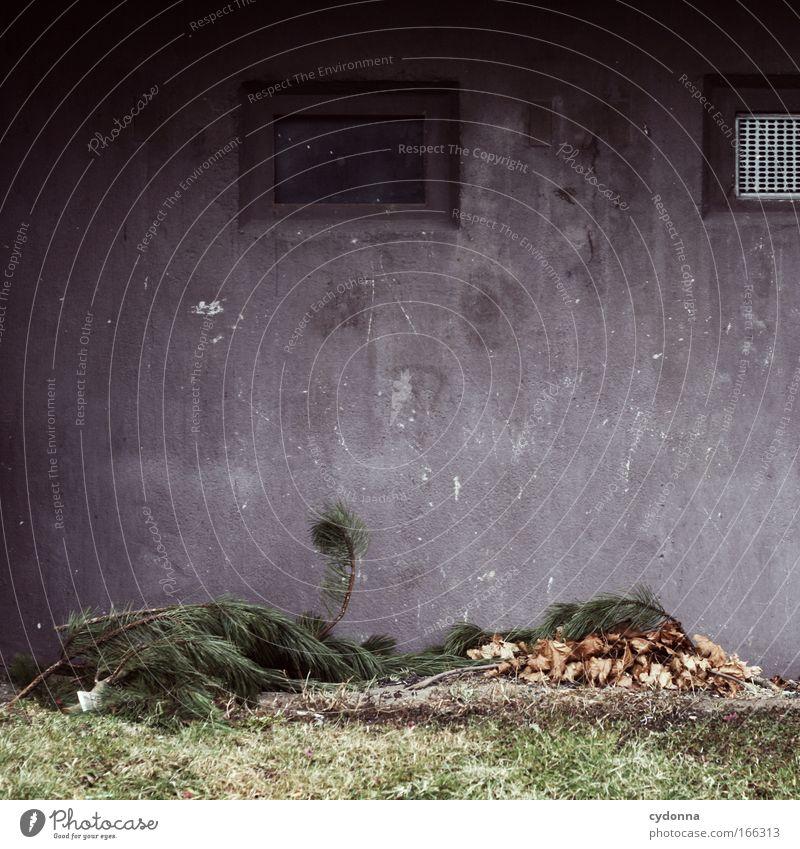 Ansammlung Farbfoto Außenaufnahme Nahaufnahme Detailaufnahme Textfreiraum oben Textfreiraum Mitte Tag Schatten Kontrast Totale Wohnung Natur Pflanze Haus Mauer