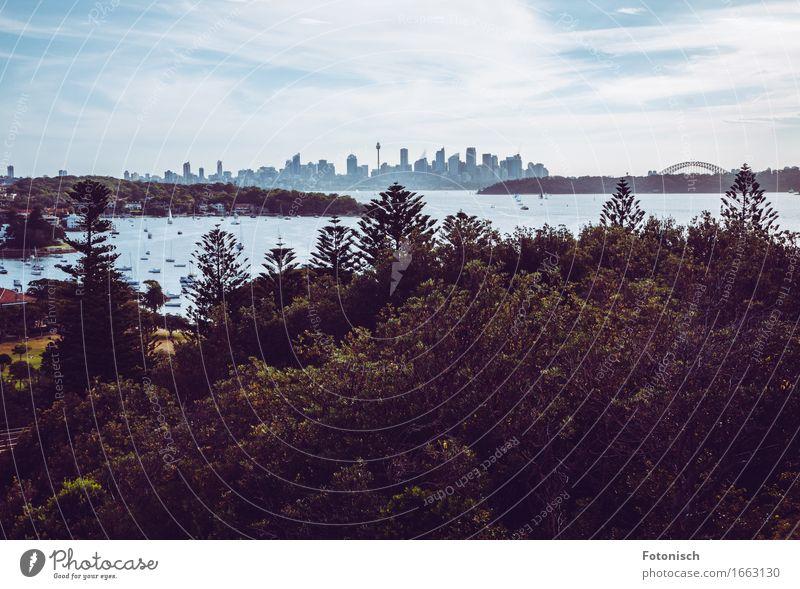 Skyline Sydney Ferien & Urlaub & Reisen Stadt Sommer Baum Wolken Wald Umwelt Tourismus Hochhaus Schönes Wetter Brücke Turm Bucht Flussufer Sightseeing