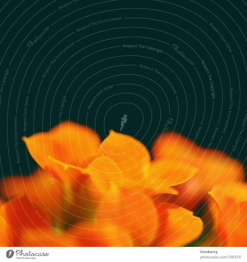 florange Farbfoto mehrfarbig Nahaufnahme Detailaufnahme Makroaufnahme Experiment Textfreiraum links Textfreiraum rechts Textfreiraum oben Textfreiraum Mitte