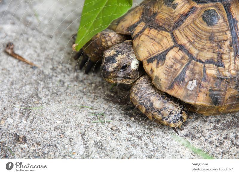 Schildi Natur alt Sommer Blatt Tier Senior Garten einzigartig Gelassenheit Haustier Tiergesicht langsam Tierliebe Panzer Schildkröte Schildkrötenpanzer