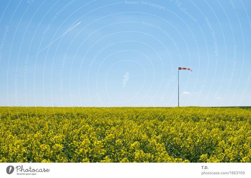 Windbeutel Natur Landschaft Luft Himmel Wolkenloser Himmel Frühling Sommer Schönes Wetter Nutzpflanze Raps Feld Flugzeug Kondensstreifen Windsack beobachten