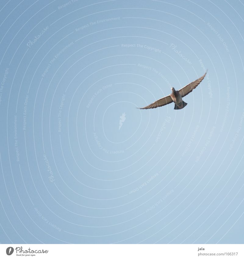 It's a new day… Farbfoto Außenaufnahme Menschenleer Textfreiraum links Textfreiraum unten Tag Luft Himmel Schönes Wetter Tier Taube Flügel fliegen Glück