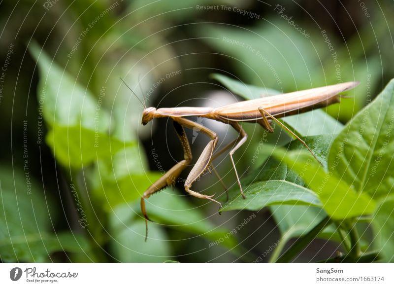 Gottesanbeterin I Natur Ferien & Urlaub & Reisen Pflanze Sommer grün Blatt Tier schwarz Umwelt Frühling Bewegung Garten Freiheit braun gehen frei