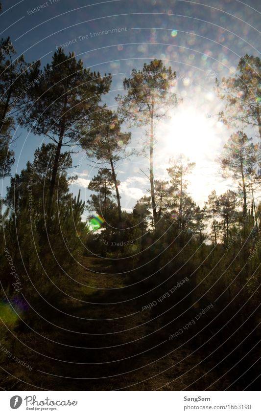 Pinienwald Himmel Natur Ferien & Urlaub & Reisen blau Sommer grün Sonne Baum Landschaft Erholung Einsamkeit Tier Wald schwarz Wärme Frühling