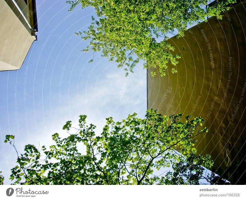 Hinterhof again Himmel Baum grün Pflanze Sommer Blatt Haus Wolken Mauer Gebäude Mieter Stadthaus Sauerstoff Vermieter Textfreiraum