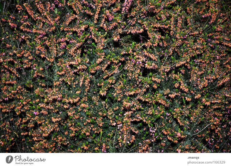 Chaos Natur grün Pflanze rot Sommer dunkel Blüte Frühling Park Sträucher einfach einzigartig außergewöhnlich gruselig Blühend leuchten