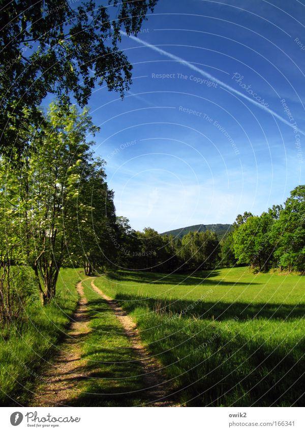Isergebirge Himmel Natur Ferien & Urlaub & Reisen Pflanze blau grün Landschaft Wolken Ferne Wald Berge u. Gebirge Umwelt Frühling Wiese Wege & Pfade Freiheit