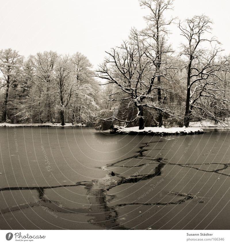 Abkühlung gefällig? Himmel Winter Wald kalt Schnee Wiese See Park Eis Küste Wetter Ausflug Frost Schwimmbad Kitsch Ast